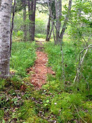 Garden woodland walk
