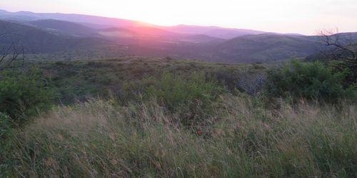 Bushvelts sunset banner