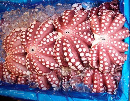 Octopus,Tokyo, Japan,Tsukiji fish market